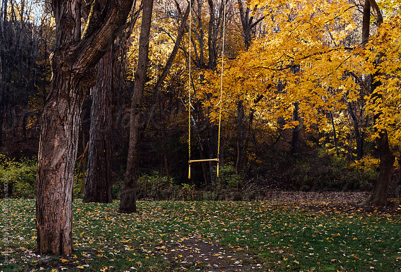 yellow swing in yellow woods by Deirdre Malfatto for Stocksy United