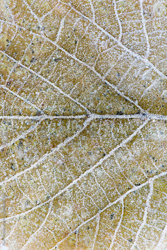 Macro leaf details by Pixel Stories for Stocksy United