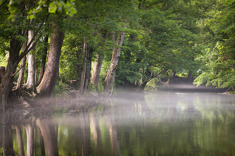 Trees on foggy river bank and mist over water by Matthew Spaulding for Stocksy United