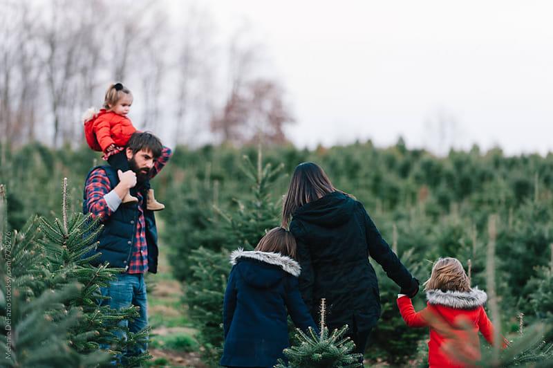 Tree Farm by Melanie DeFazio for Stocksy United
