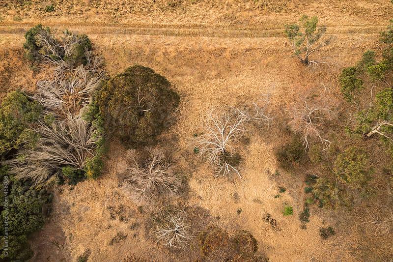 overhead view of trees in rural australia by Gillian Vann for Stocksy United