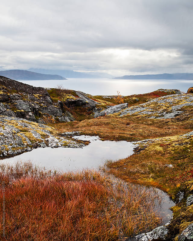 Fall colors by the sea in northern Norway by Jonatan Hedberg for Stocksy United