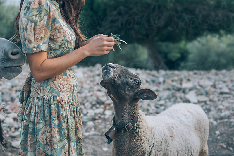 young woman feeding a sweet goat by Lydia Cazorla for Stocksy United