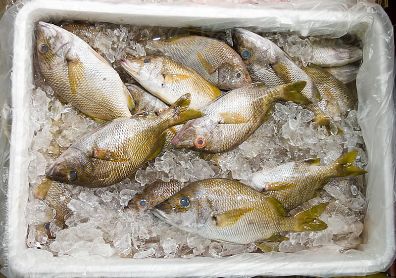 Fresh fish (porgies) for sale at a fish market by Mihael Blikshteyn for Stocksy United