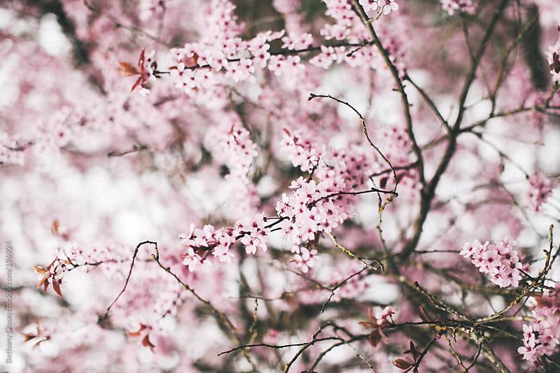 Spring still in Bloom by Bethany Olson for Stocksy United