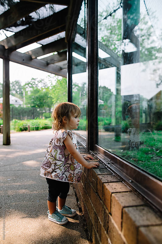 side view of girl looking in zoo exhibit window by Maria Manco for Stocksy United
