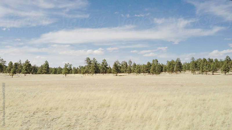 Pine Trees and Grasslands by Kevin Russ for Stocksy United