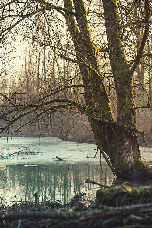 weathered tree on a lake at sunset by Leander Nardin for Stocksy United