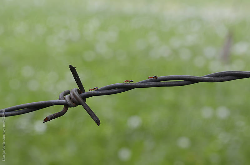 barbed wire with ants by Marija Anicic for Stocksy United