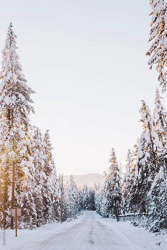 Morning sun shining through snow covered trees along a rural mountain road by Justin Mullet for Stocksy United