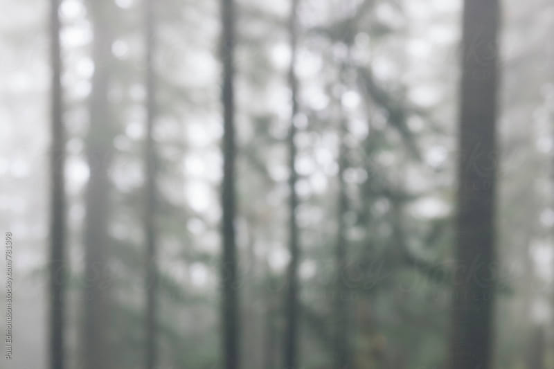Abstract of forest in dense fog by Paul Edmondson for Stocksy United