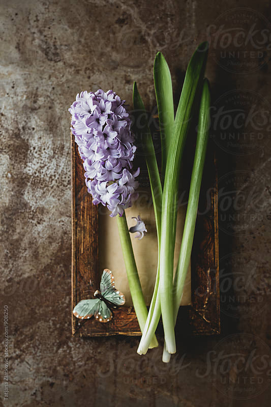 Hyacinth with butterfly by Tatjana Ristanic for Stocksy United