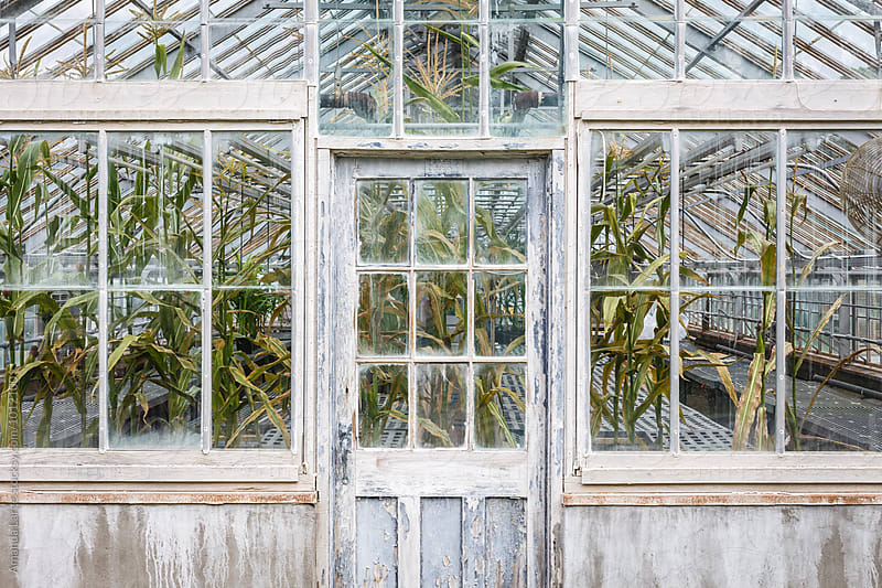 greenhouse seen from outside by Amanda Large for Stocksy United