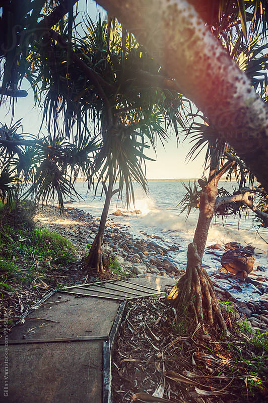 pathway to a secret beach, Noosa, Qld by Gillian Vann for Stocksy United