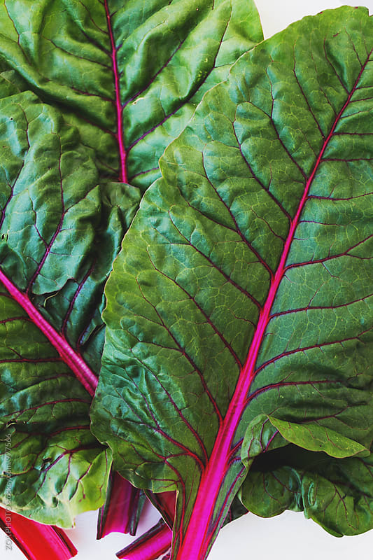 Swiss Chard by ZOA PHOTO for Stocksy United