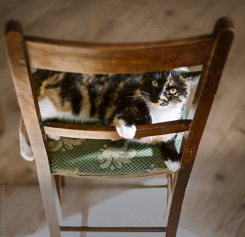 Kitten on a seat. by Darren Muir for Stocksy United