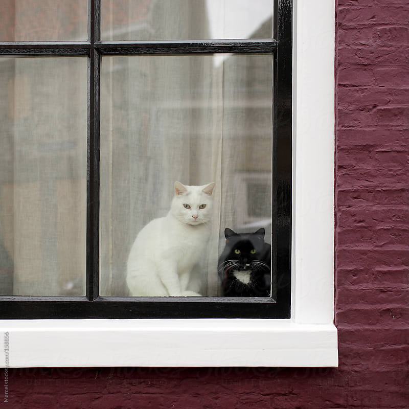 Cats behind the window by Marcel for Stocksy United