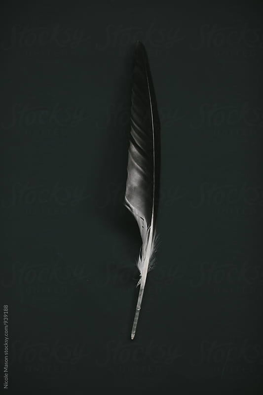 feather on black background by Nicole Mason for Stocksy United