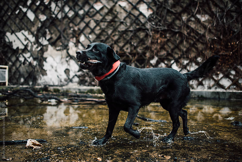 Dog playing in the shallow water in front of the old building by Boris Jovanovic for Stocksy United