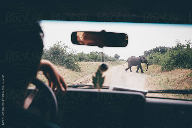 Elephant Crossing Road by Diane Durongpisitkul for Stocksy United