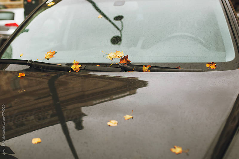 Car covered with leaves by Jovana Rikalo for Stocksy United