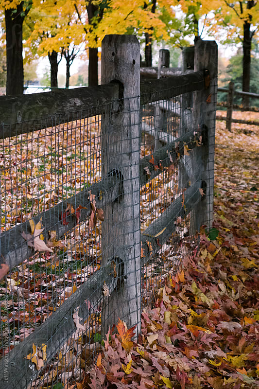 Fence and Autumn Leaves by Jeff Wasserman for Stocksy United