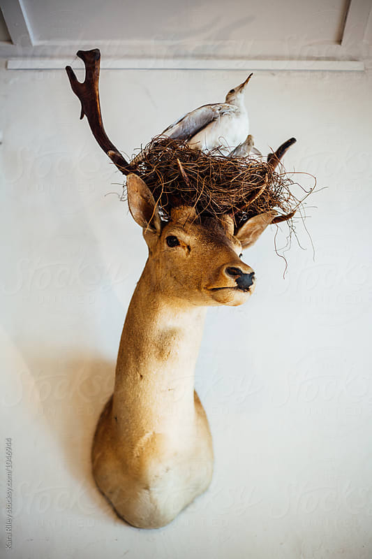 Taxidermy Deer with birdsnest by Kara Riley for Stocksy United