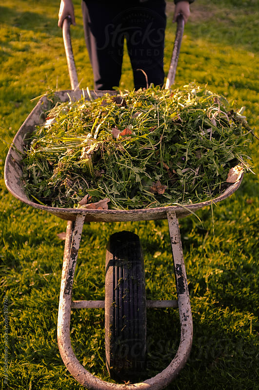 wheelbarrow with grass by Paul Schlemmer for Stocksy United