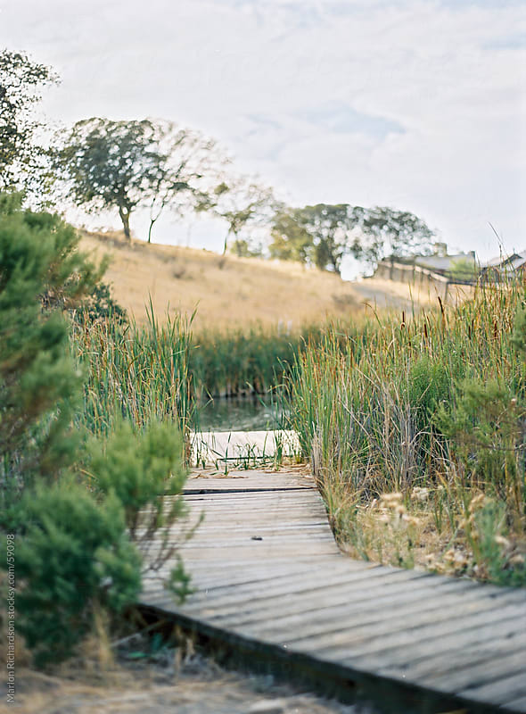 Grassy dock on a lake by Marlon Richardson for Stocksy United