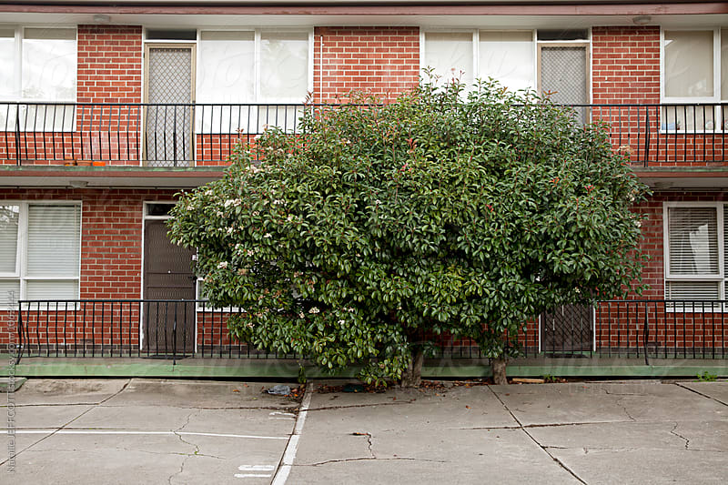 Large tree shrub in carpark and flats in Melbourne, Australia by Natalie JEFFCOTT for Stocksy United