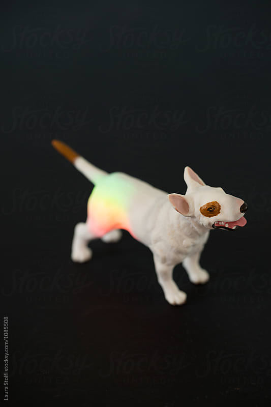 Terrier toy with rainbow light on it on black by Laura Stolfi for Stocksy United
