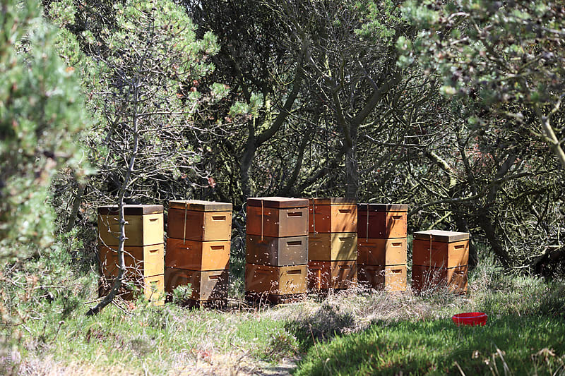 Beehives in nature by Marcel for Stocksy United