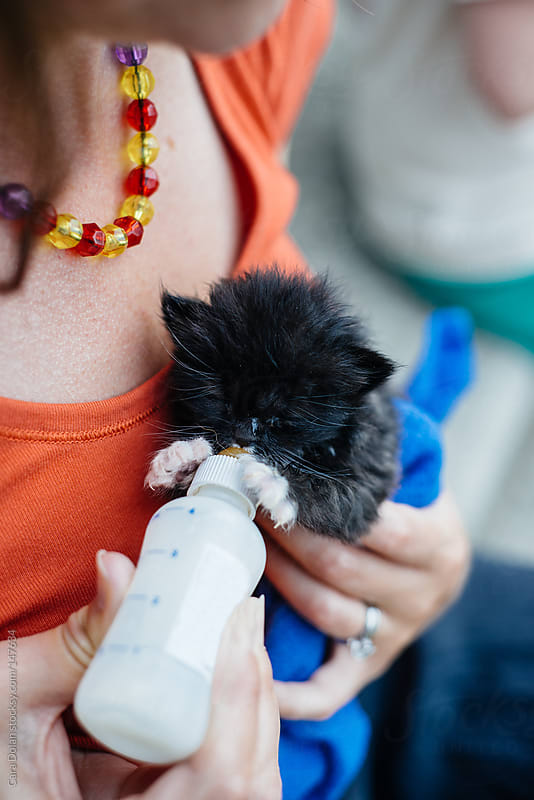 Woman feeds orphaned kitten formula with a bottle by Cara Dolan for Stocksy United