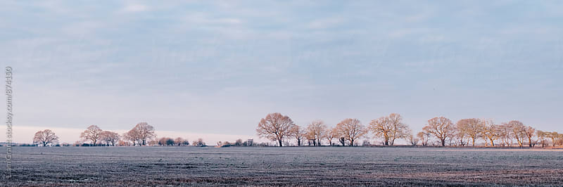 Row of trees in a frosty field lit by the sunrise. Hilborough, Norfolk, UK. by Liam Grant for Stocksy United