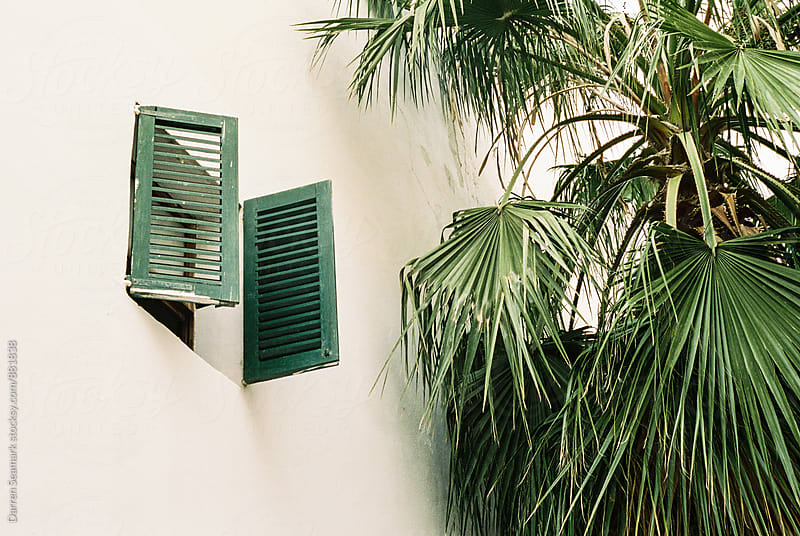 Green window shutters next to green palm tree leaves by Darren Seamark for Stocksy United