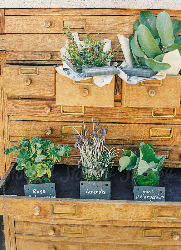 Herb Garden Display  by Vicki Grafton Photography for Stocksy United