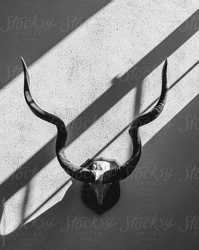 Animal head antlers hanging on wall by Trent Lanz for Stocksy United