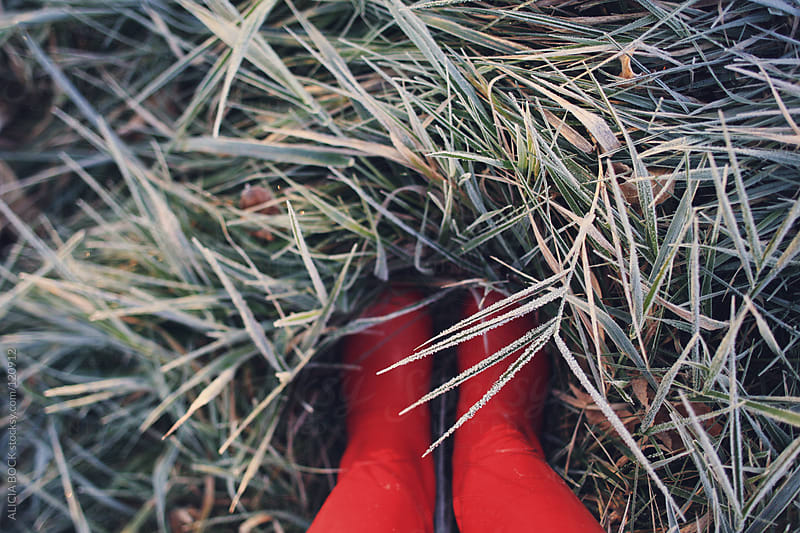 Red Boots In Frosty Grass by ALICIA BOCK for Stocksy United