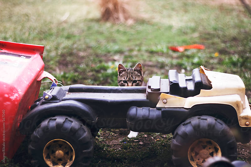 Little kitty is hiding behind childrens truck toy by Jovana Rikalo for Stocksy United