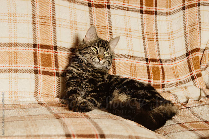Lazy tired cat sitting on a blanket by Justin Mullet for Stocksy United