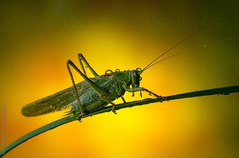 Grasshopper by Gabriel Ozon for Stocksy United