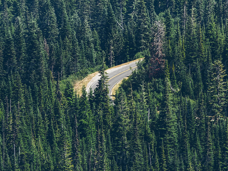 highway through the forest of MT. Rainier National Park by unite images for Stocksy United