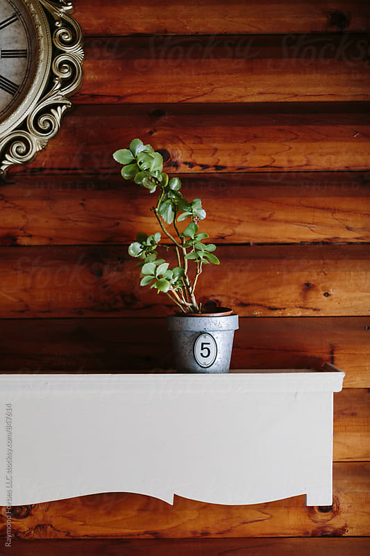 Plant on a Shelf  by Raymond Forbes LLC for Stocksy United
