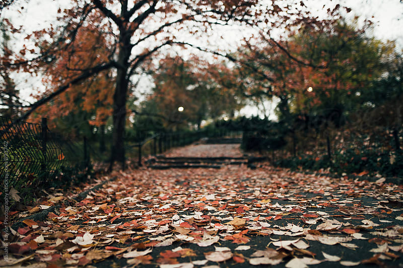 Path with leaves by Isaiah & Taylor Photography for Stocksy United