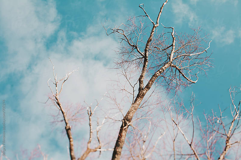 Tree on a background of blue sky by Sergey Filimonov for Stocksy United
