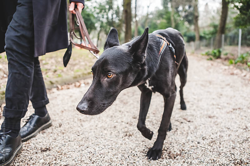 Shy Dog Walking with Owner at the Park by Giorgio Magini for Stocksy United