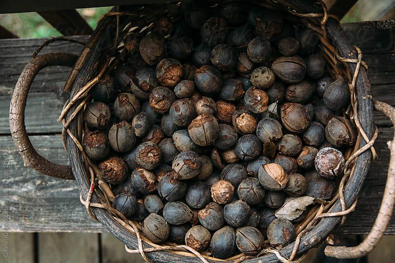 Hickory Nuts Basket by Gabriel (Gabi) Bucataru for Stocksy United