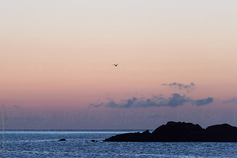 Seagull flying over the sea at sunrise by Luca Pierro for Stocksy United
