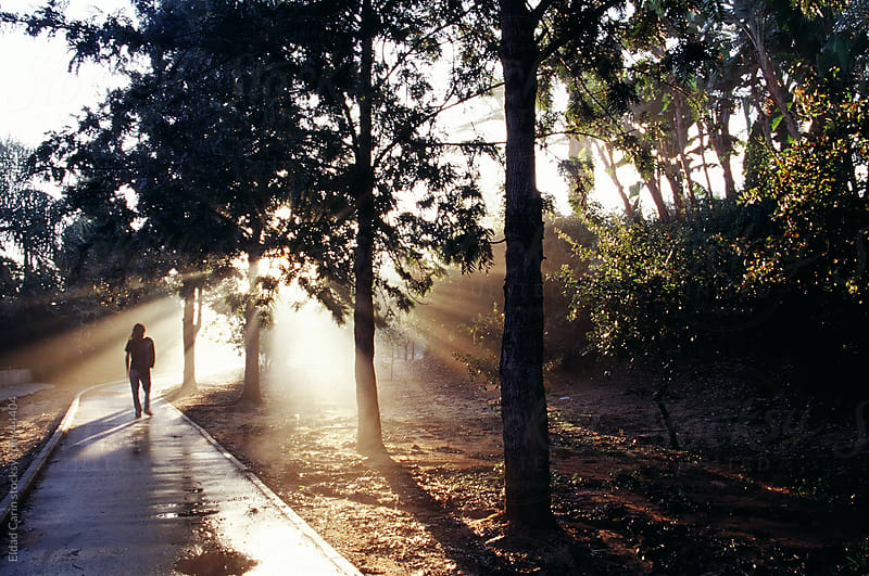 Person Walking in Grove Path at Sunrise by Eldad Carin for Stocksy United
