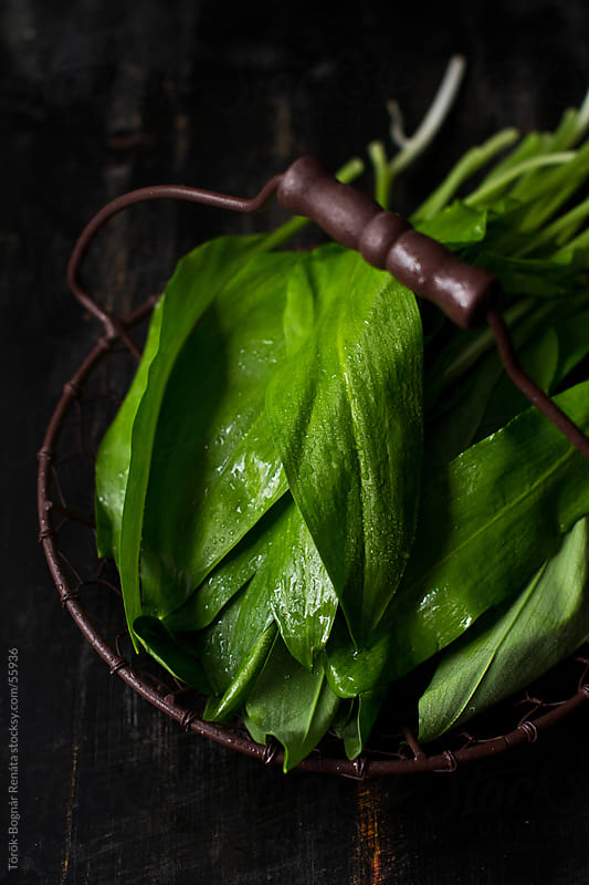 Wild garlic by Török-Bognár Renáta for Stocksy United